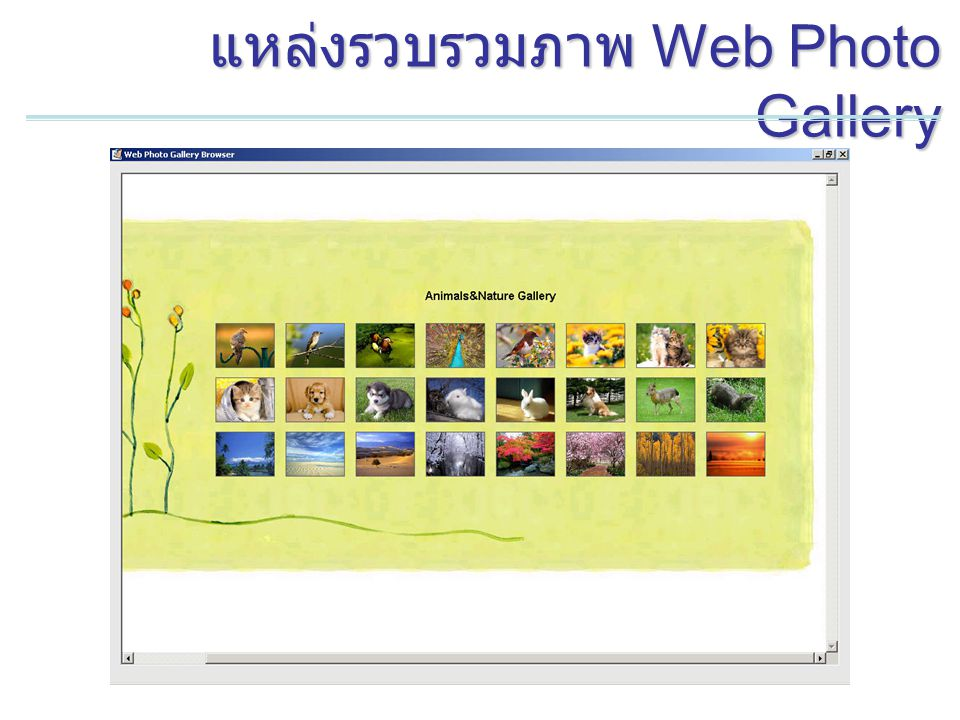 แหล่งรวบรวมภาพ Web Photo Gallery