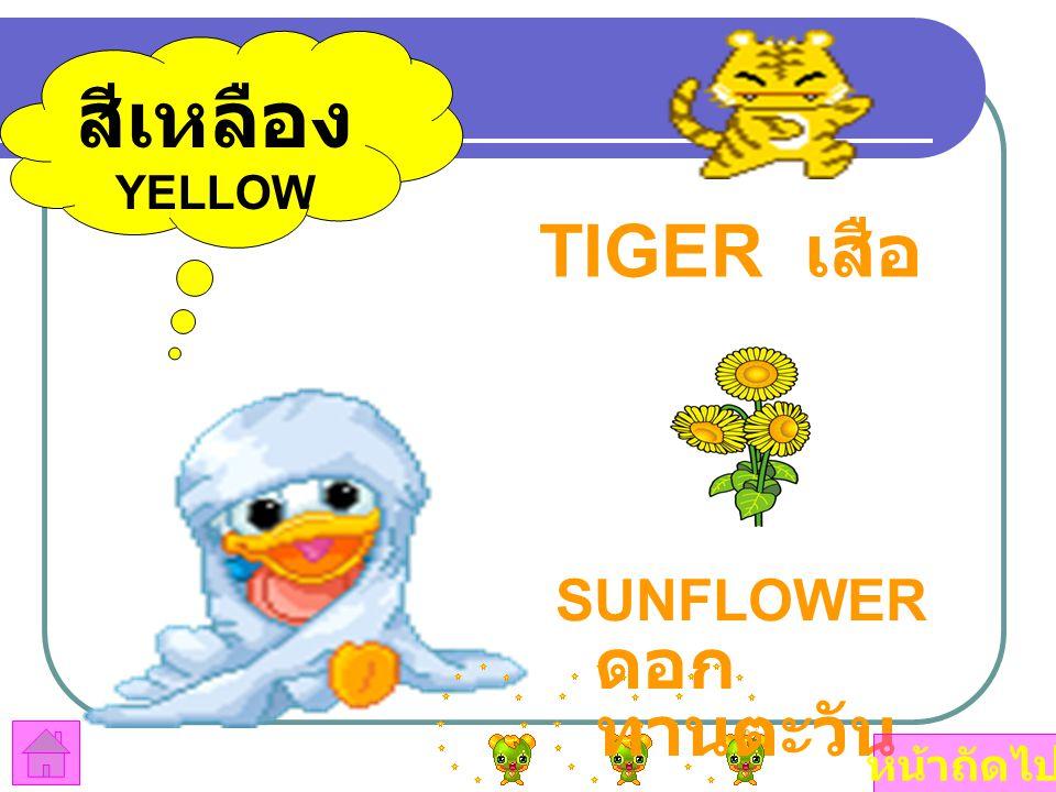 สีเหลือง YELLOW TIGER เสือ SUNFLOWER ดอกทานตะวัน หน้าถัดไป