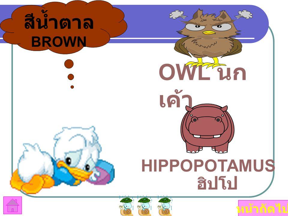 สีน้ำตาล BROWN OWL นกเค้า HIPPOPOTAMUS ฮิปโป หน้าถัดไป