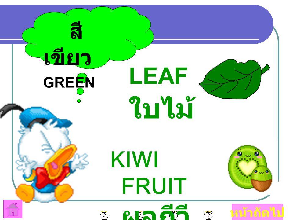 สีเขียว GREEN LEAF ใบไม้ KIWI FRUIT ผลกีวี หน้าถัดไป