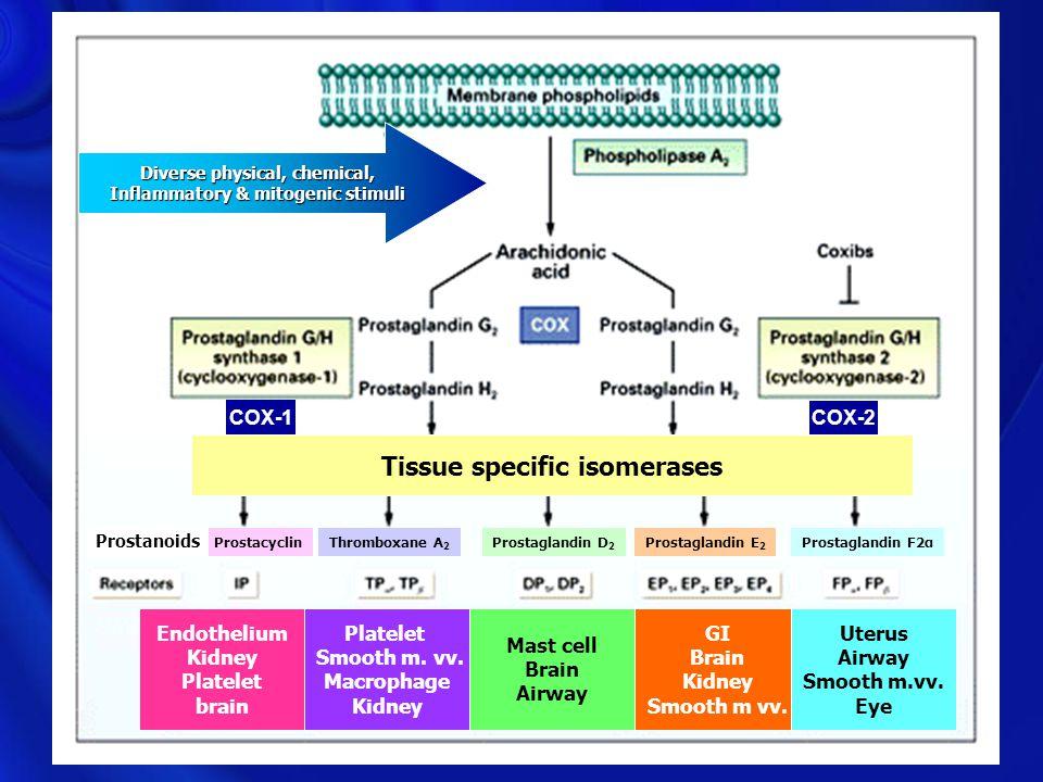 COXIBS Tissue specific isomerases Endothelium Kidney Platelet brain