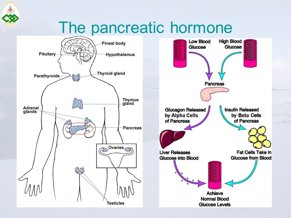 The pancreatic hormone