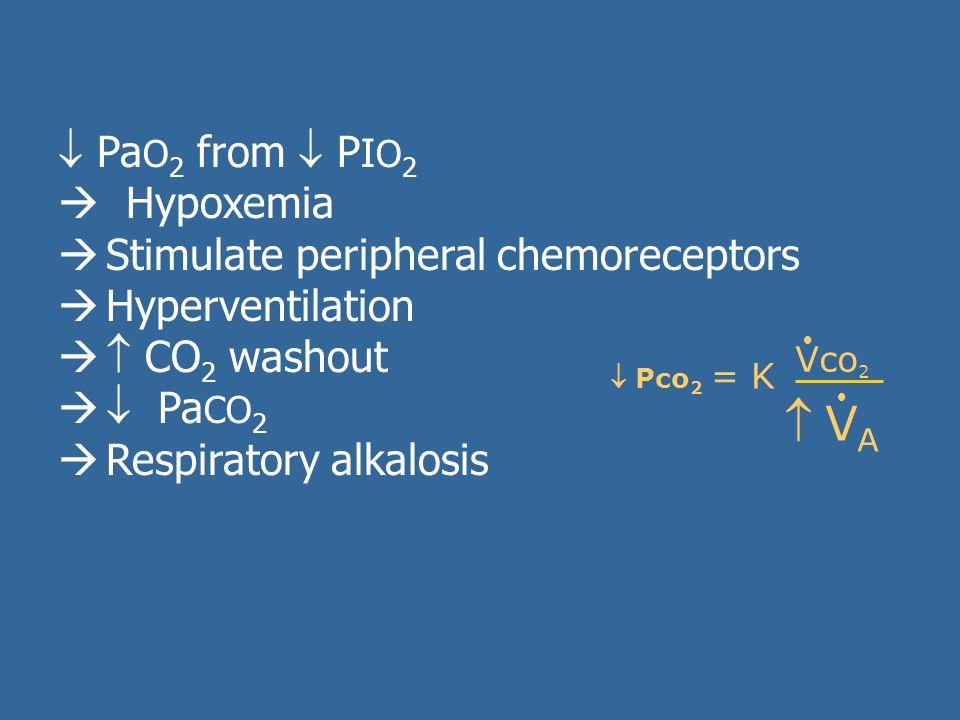  VA PaO2 from  PIO2  Hypoxemia Stimulate peripheral chemoreceptors
