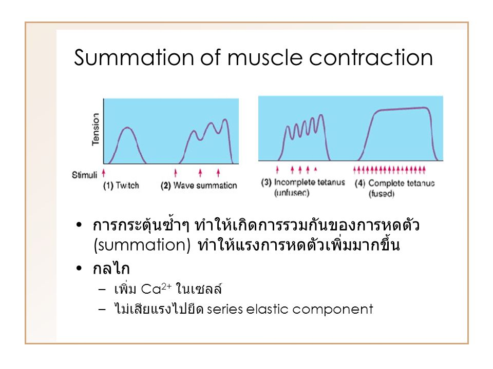 Summation of muscle contraction