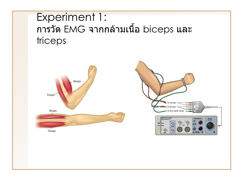 Experiment 1: การวัด EMG จากกล้ามเนื้อ biceps และ triceps