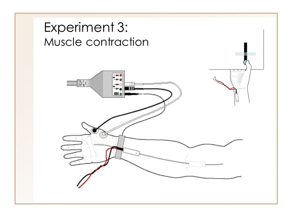 Experiment 3: Muscle contraction