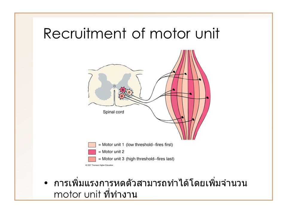 Recruitment of motor unit