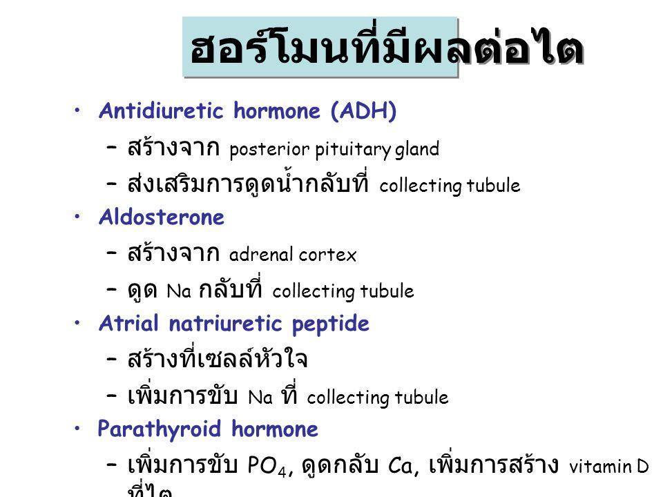 ฮอร์โมนที่มีผลต่อไต สร้างจาก posterior pituitary gland