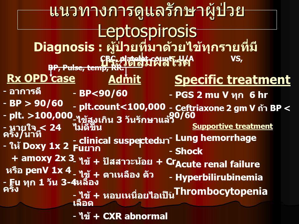 แนวทางการดูแลรักษาผู้ป่วย Leptospirosis