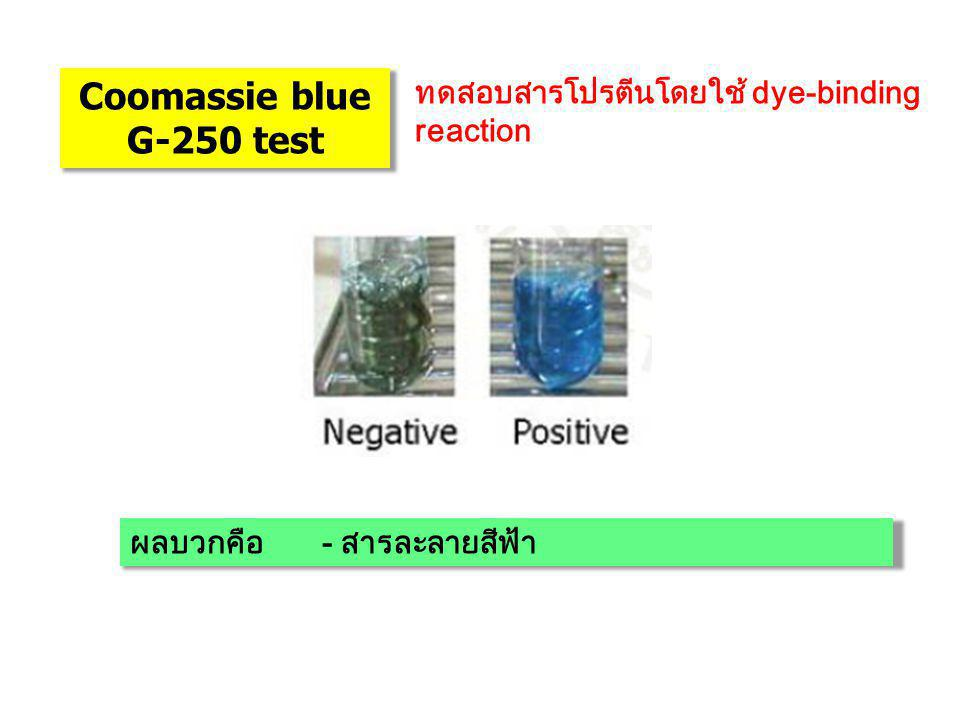 Coomassie blue G-250 test ทดสอบสารโปรตีนโดยใช้ dye-binding reaction