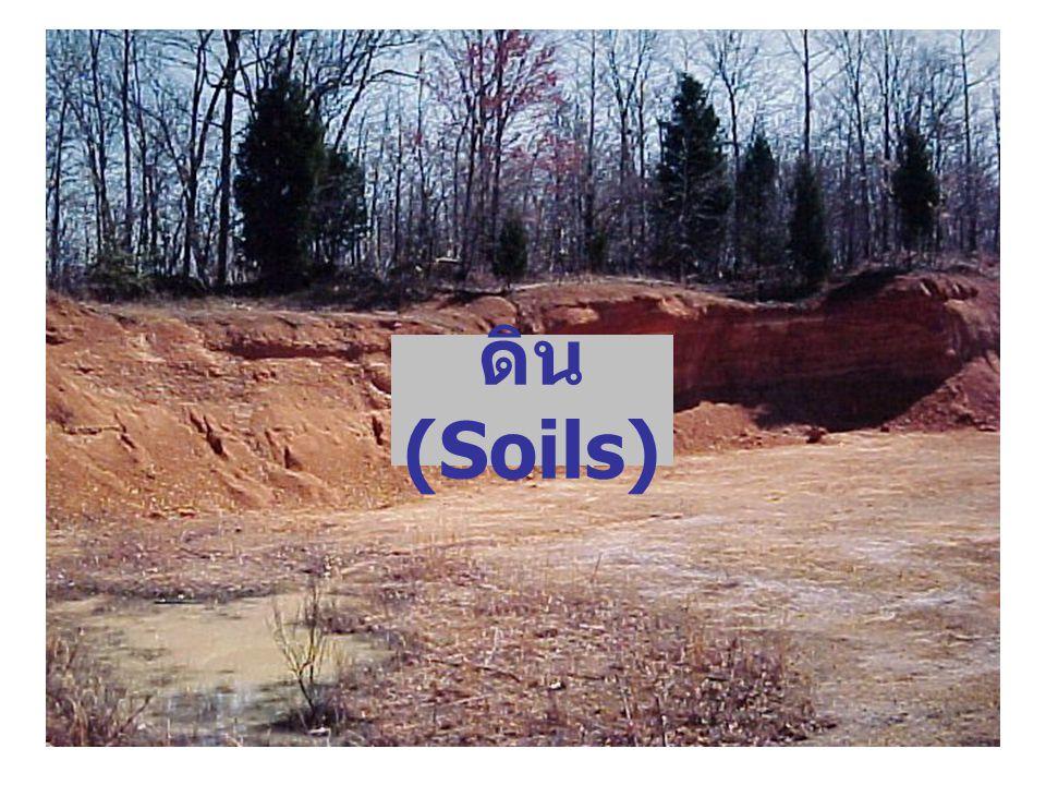 ดิน (Soils)
