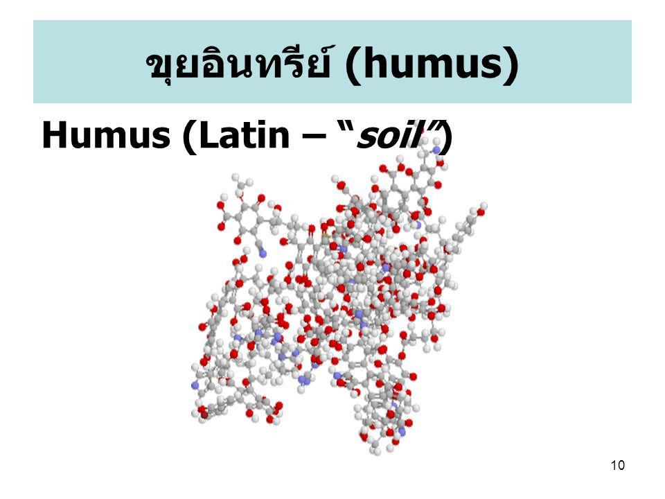 ขุยอินทรีย์ (humus) Humus (Latin – soil )