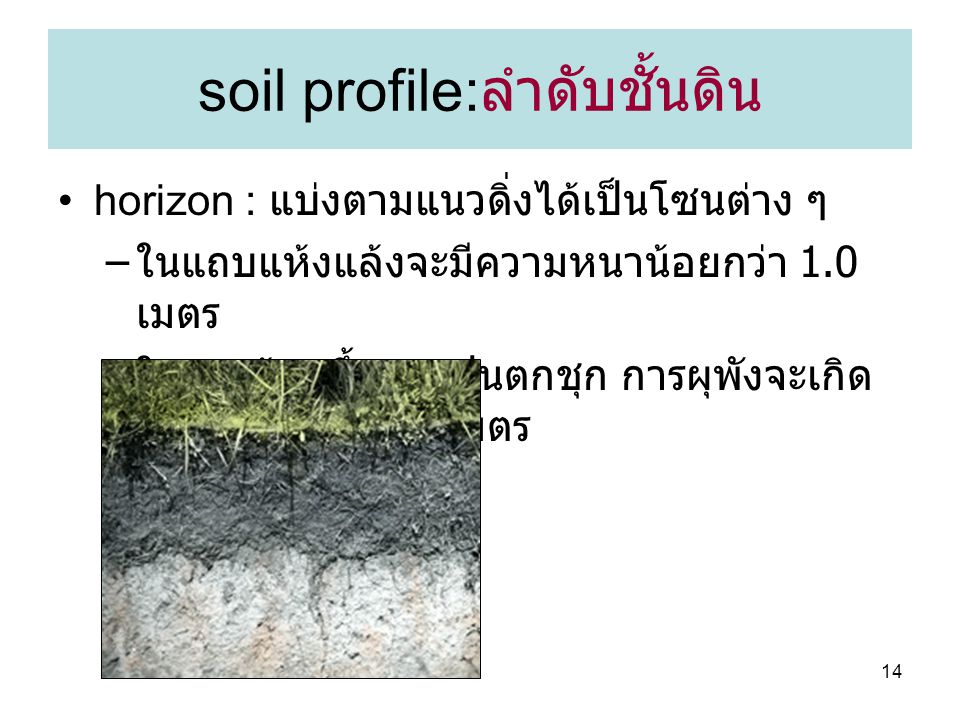 soil profile:ลำดับชั้นดิน