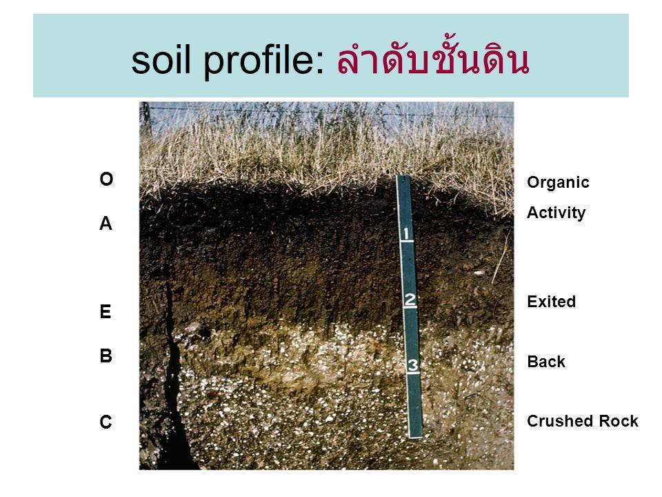 soil profile: ลำดับชั้นดิน
