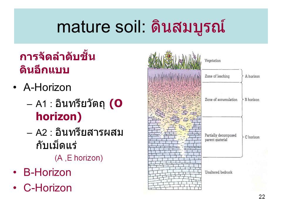 mature soil: ดินสมบูรณ์