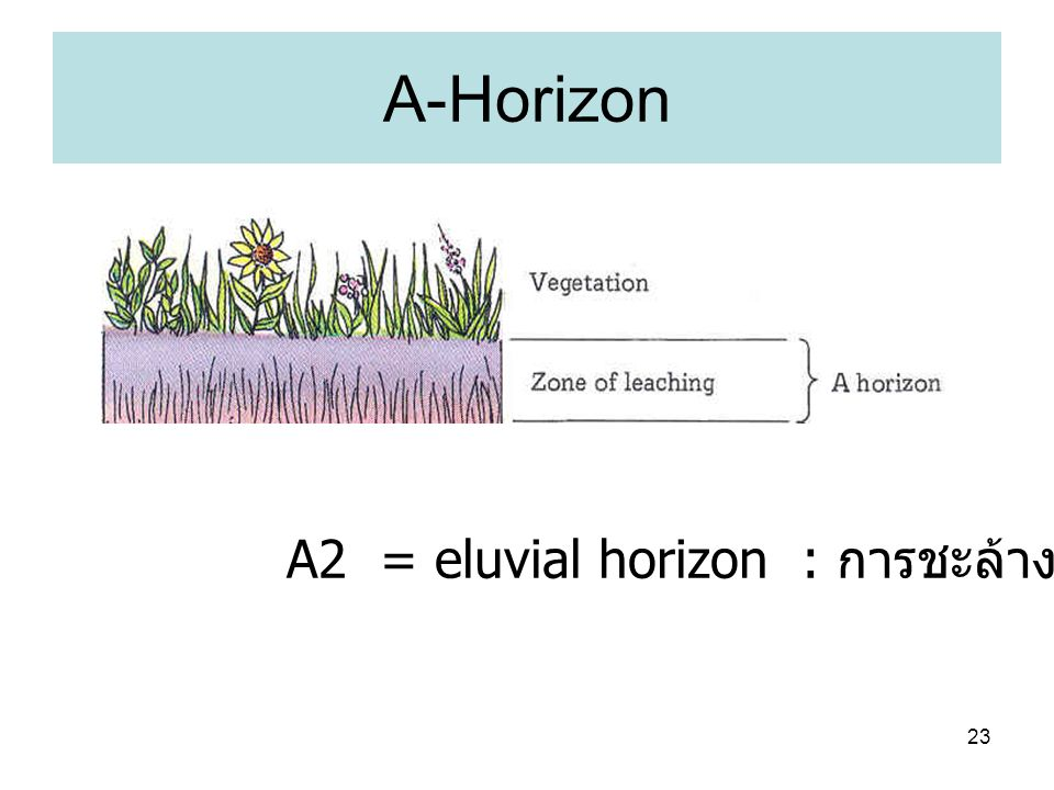 A-Horizon A2 = eluvial horizon : การชะล้าง