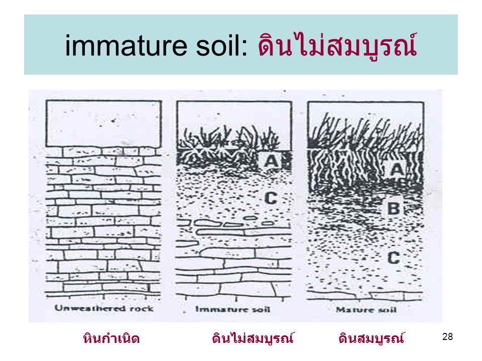 immature soil: ดินไม่สมบูรณ์