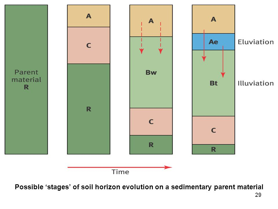 Possible 'stages' of soil horizon evolution on a sedimentary parent material