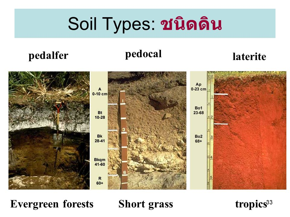 Soil Types: ชนิดดิน pedalfer pedocal laterite Evergreen forests