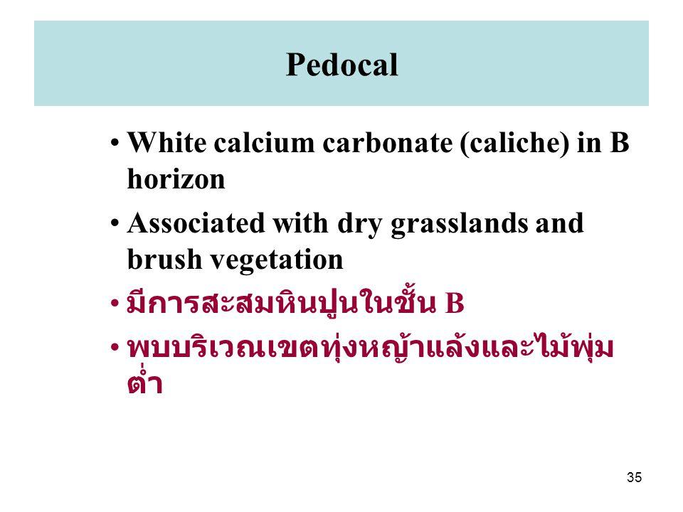 Pedocal White calcium carbonate (caliche) in B horizon