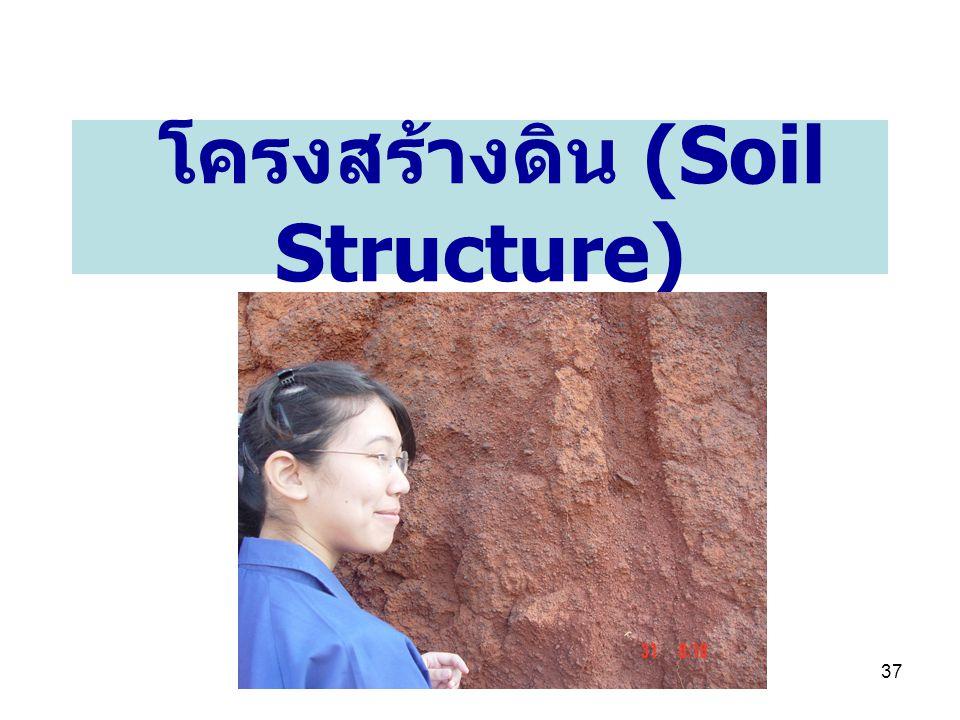 โครงสร้างดิน (Soil Structure)