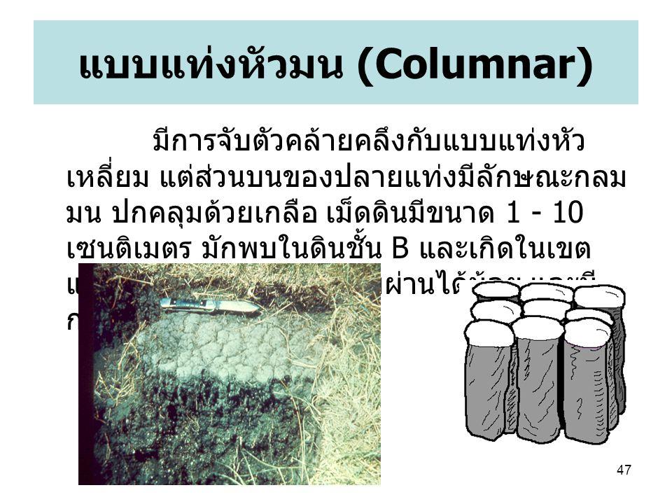 แบบแท่งหัวมน (Columnar)