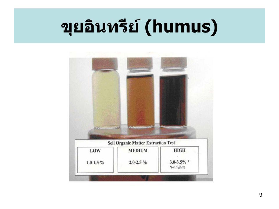 ขุยอินทรีย์ (humus)