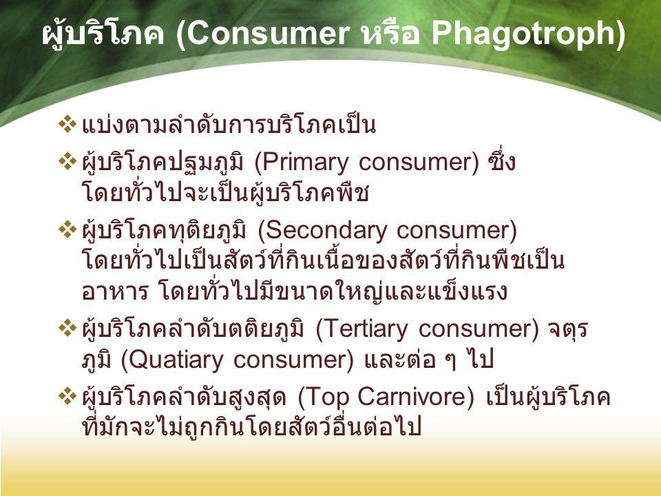 ผู้บริโภค (Consumer หรือ Phagotroph)