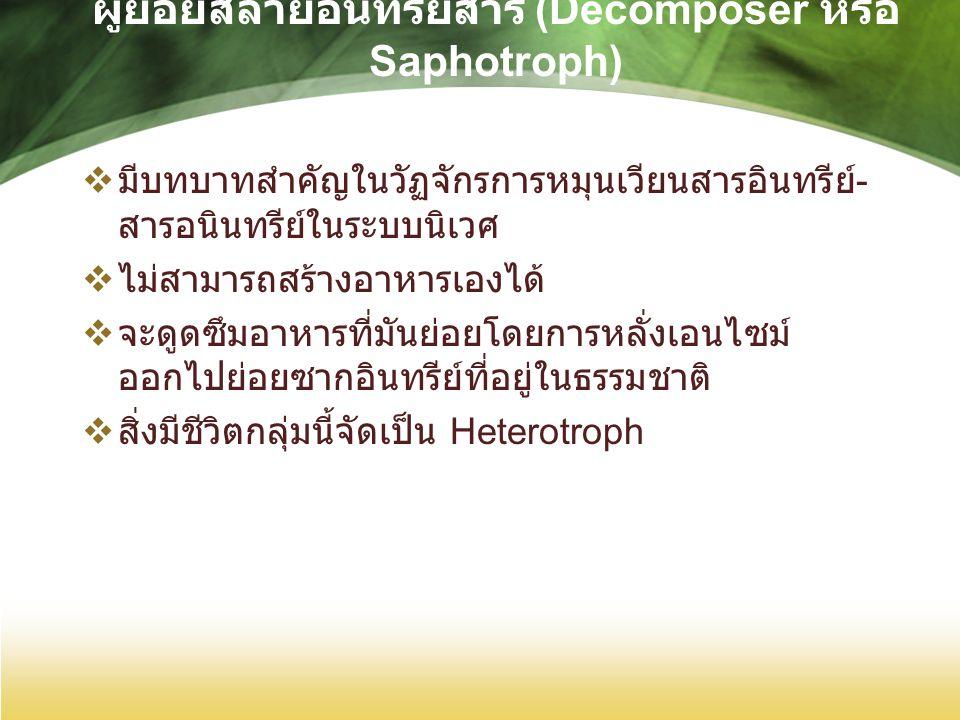 ผู้ย่อยสลายอินทรียสาร (Decomposer หรือ Saphotroph)