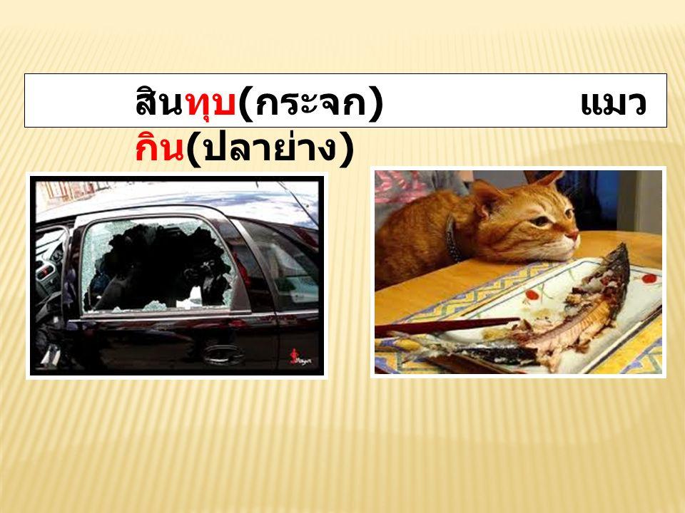 สินทุบ(กระจก) แมวกิน(ปลาย่าง)