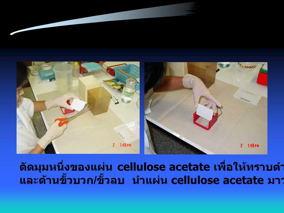 ตัดมุมหนึ่งของแผ่น cellulose acetate เพื่อให้ทราบตำแหน่งของสารตัวอย่าง