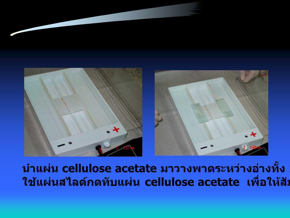 นำแผ่น cellulose acetate มาวางพาดระหว่างอ่างทั้ง 2 โดยวางคว่ำหน้า