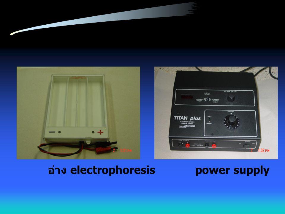 อ่าง electrophoresis power supply