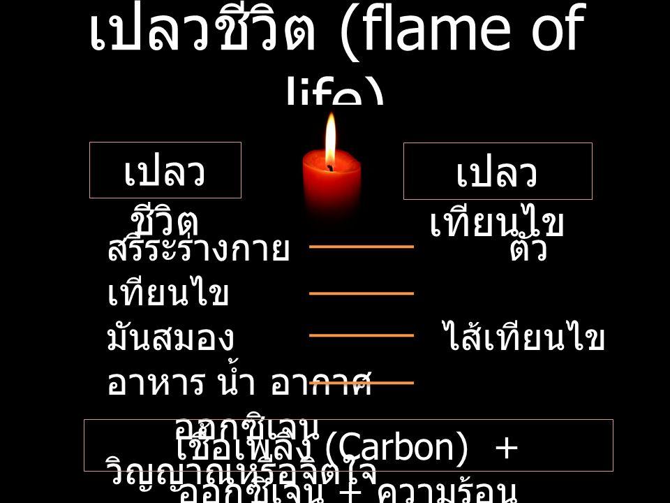 เปลวชีวิต (flame of life)