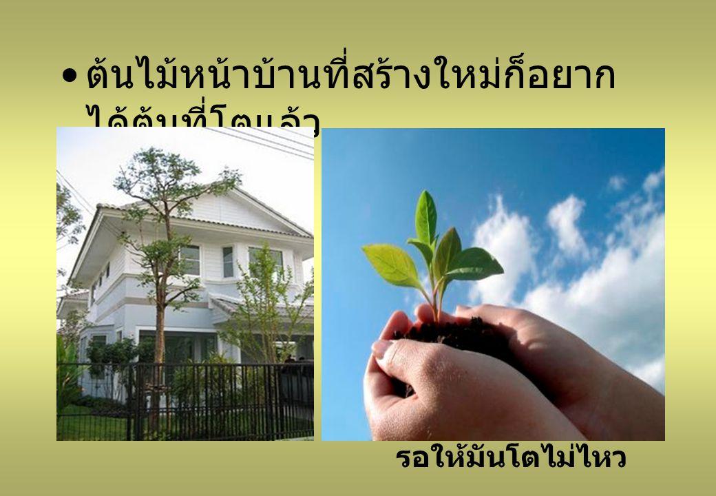 ต้นไม้หน้าบ้านที่สร้างใหม่ก็อยากได้ต้นที่โตแล้ว