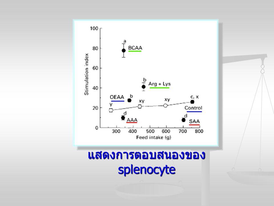 แสดงการตอบสนองของ splenocyte