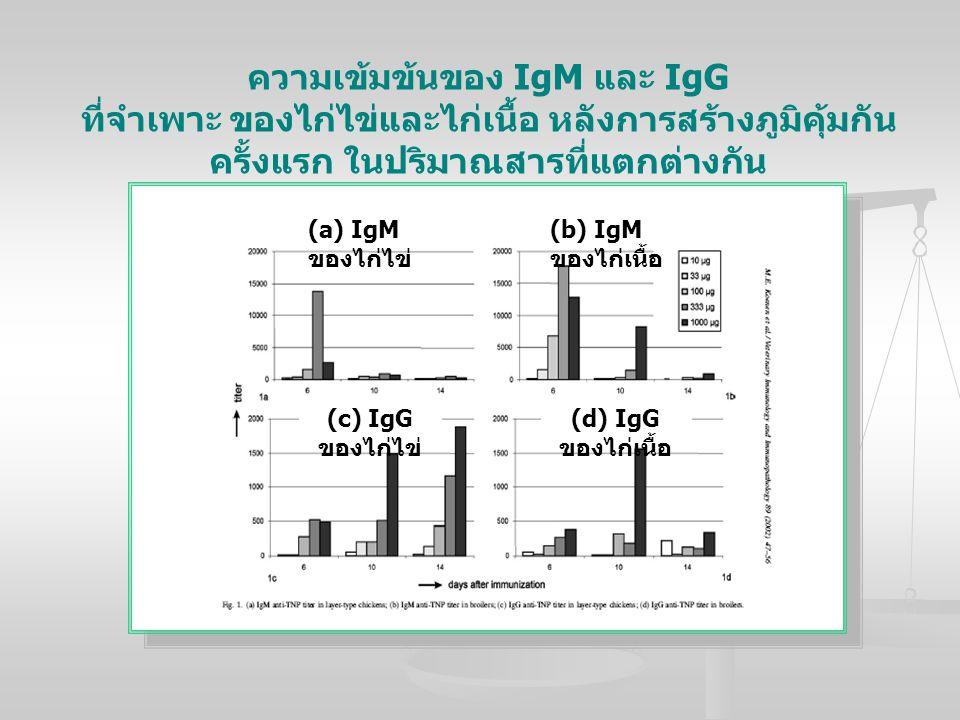 ความเข้มข้นของ IgM และ IgG ที่จำเพาะ ของไก่ไข่และไก่เนื้อ หลังการสร้างภูมิคุ้มกันครั้งแรก ในปริมาณสารที่แตกต่างกัน