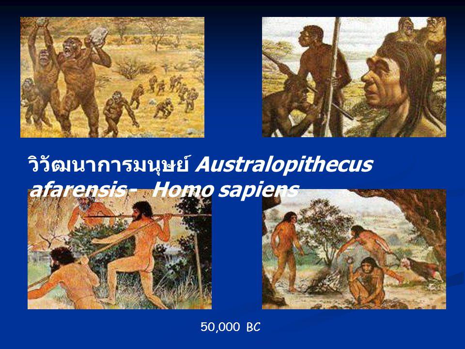 วิวัฒนาการมนุษย์ Australopithecus afarensis - Homo sapiens