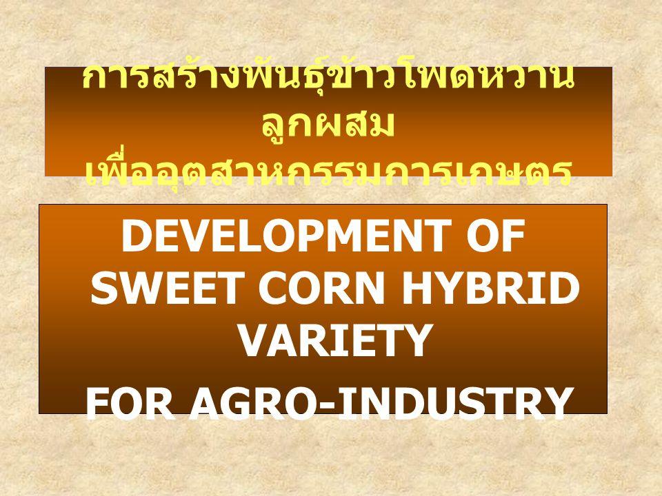 การสร้างพันธุ์ข้าวโพดหวานลูกผสม เพื่ออุตสาหกรรมการเกษตร