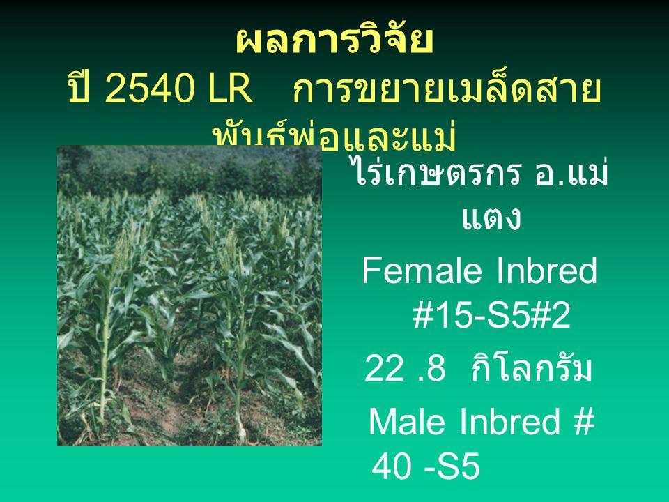 ผลการวิจัย ปี 2540 LR การขยายเมล็ดสายพันธุ์พ่อและแม่