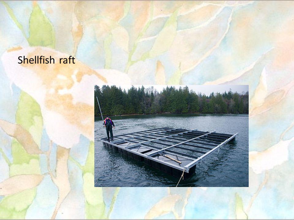 Shellfish raft
