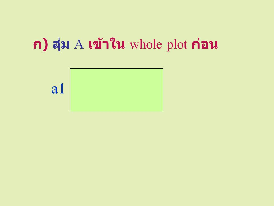 ก) สุ่ม A เข้าใน whole plot ก่อน