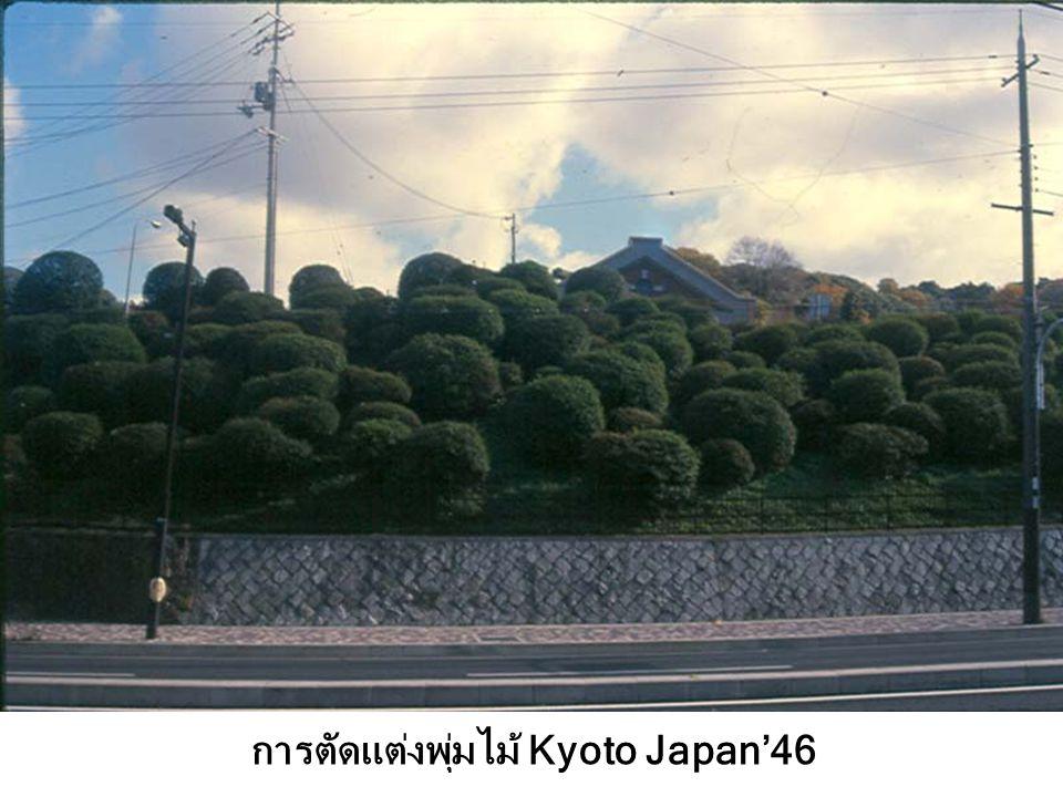 การตัดแต่งพุ่มไม้ Kyoto Japan'46