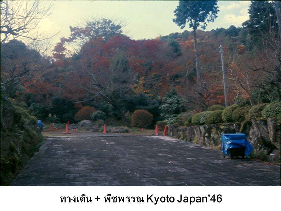ทางเดิน + พืชพรรณ Kyoto Japan'46