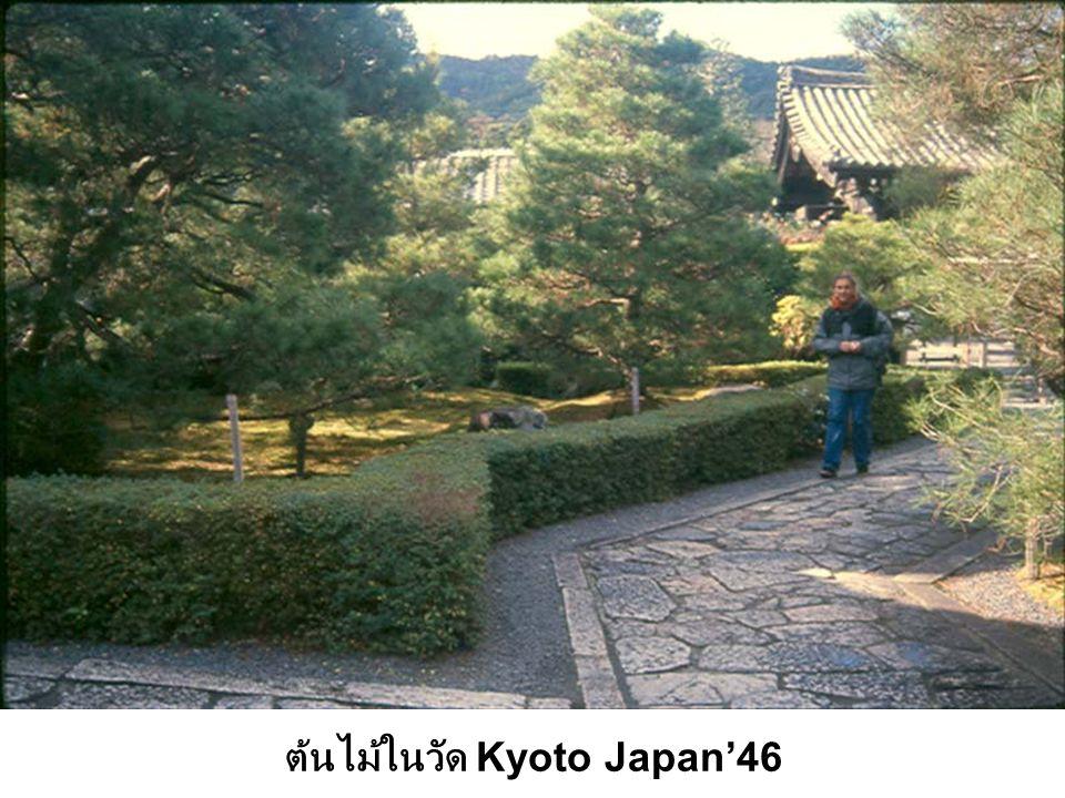 ต้นไม้ในวัด Kyoto Japan'46