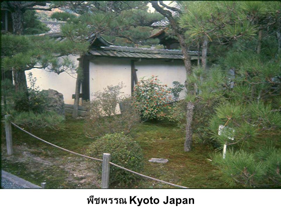 พืชพรรณ Kyoto Japan