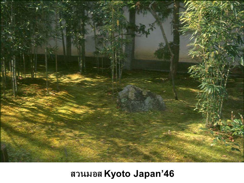 สวนมอส Kyoto Japan'46