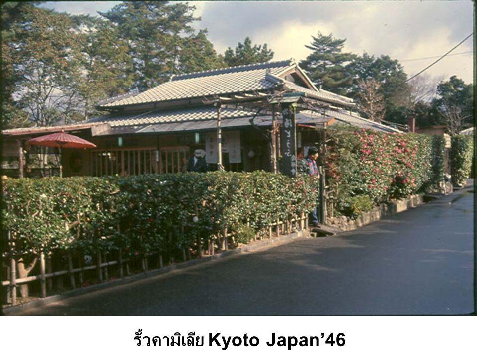 รั้วคามิเลีย Kyoto Japan'46