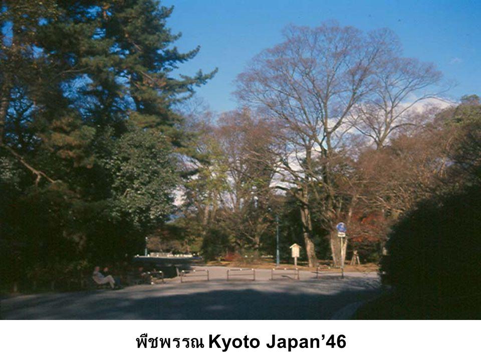 พืชพรรณ Kyoto Japan'46