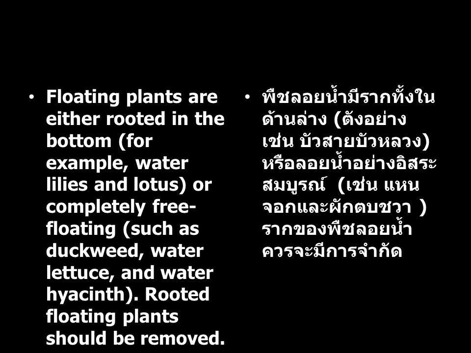 Floating plants are either rooted in the bottom (for example, water lilies and lotus) or completely free-floating (such as duckweed, water lettuce, and water hyacinth). Rooted floating plants should be removed.